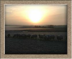 Click to see sheep photo full size